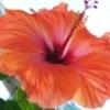 Цитрусовый сад дома (коллекция от vika) - последнее сообщение от olivust